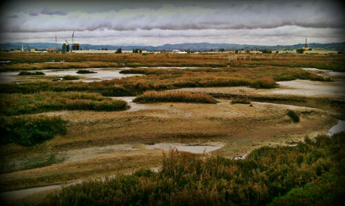 Hayward Shoreline